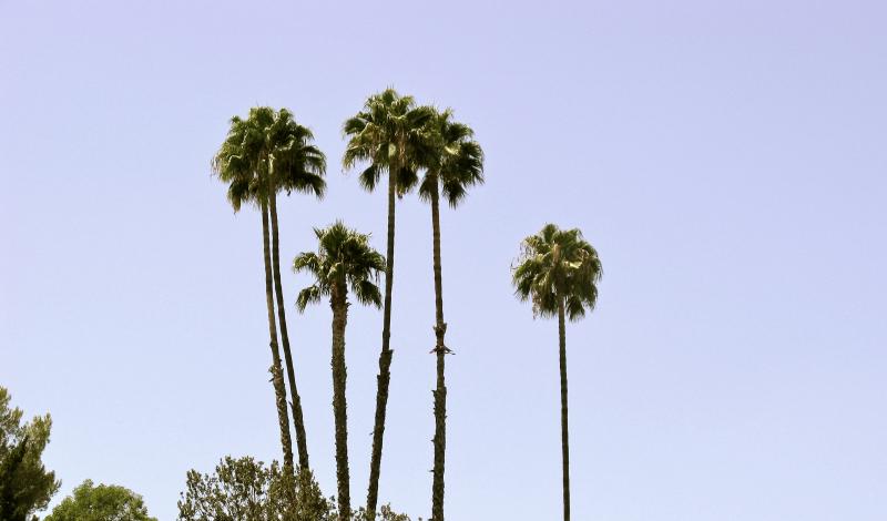 Palms 2, Los Angeles  2016