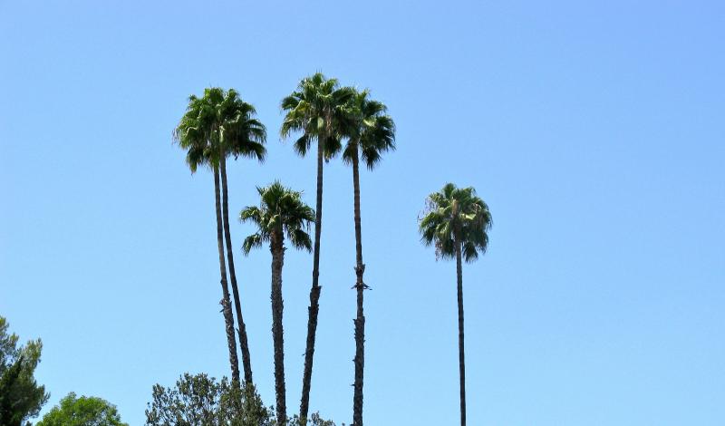 Palms 1, Los Angeles  2016